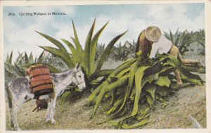 Man With Donkey Getting Pulque In Mexico sk153