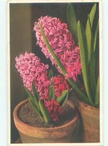 foreign Old Postcard BEAUTIFUL PINK FLOWERS IN FLOWERPOT AC2741