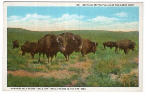 Buffalo On The Plains Of The Great West