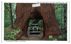 1932 Coolidge Tree at Coolidge Redwood Park, CA Postcard *5C