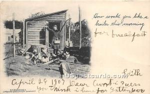Feeding the Chickens Mountaindale NY Postal used unknown