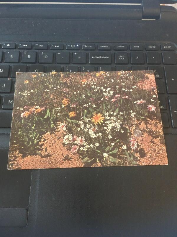 Vintage Postcard; Beartooth Mountains, Montana