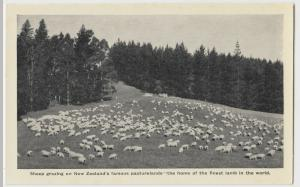 New Zealand; Sheep Grazing In NZ, Finest Lamb In The World PPC, Unused, c 1920