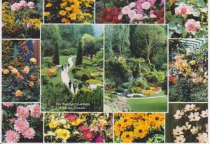 BUTCHART GARDENS, VICTORIA - FLOWERS BORDER