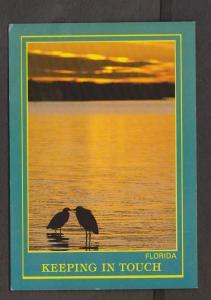 Birds & Beautiful Florida Sunset - 1960s - Unused