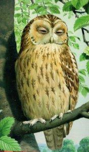 1960s Tawny Owl Vintage Ladybird Book Childrens Birds Postcard