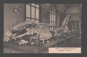 086542 Skeleton Animal Dinosaur NATURE History MUSEUM vintage2