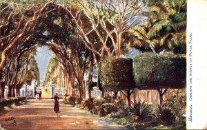 Cuba Havana Gardens and Avenue Of Royal Palms Tucks