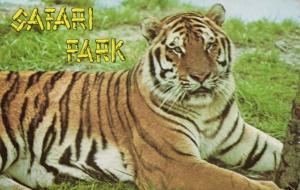 Six Flags Great Adventure Safari, Jackson, NJ, Siberian Tiger (1960s)