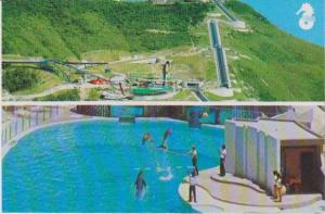 #72: Bird´s Eye View of Dolphin Trainers & Water Slide, The Ocean Park, Aber...