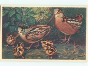 Pre-1980 signed WOODCOCK BIRD AC7104