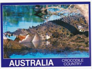 Crocodile Country , Australia, 60-80s
