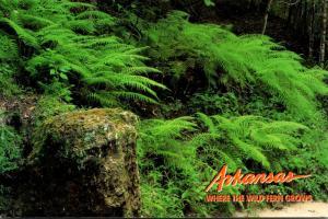 Arkansas Ponca Wilderness Area Wild Ferns