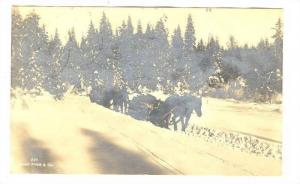 RP, Horse Pulling Wood On The Snow, Norway, 1920s