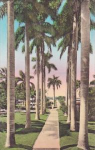 Walk To The Pier And Swimming Pool Hotel Royal Palm Fort Myers Florida Handco...