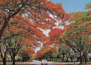 Blakiston Street Salisbury Zimbabwe Postcard