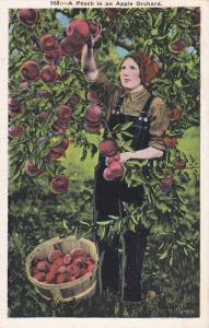 A Peach in an Apple Tree Orchard - Agriculture Apple Harvest - WB