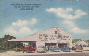 Florida Largo Orange Blossom Groves One Mile North Of Bay Pines