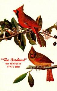 Kentucky State Bird The Cardinal
