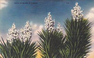 Yucca In Bloom In Florida