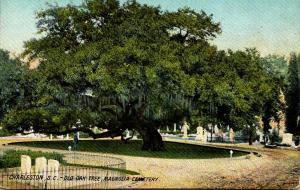 South Carolina Charleston Magnolia Cemetery Old Oak Tree