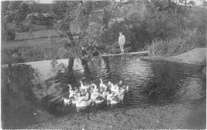 RP Boy Watching Ducks in a Pond