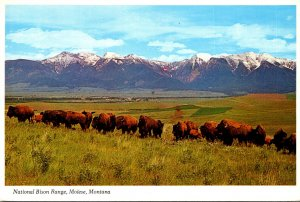 Montana Moiese National Bison Range Buffalo Herd 1987