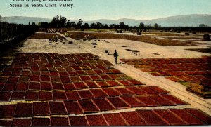 California Santa Clara County Fruit Drying Scene