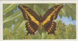 Brooke Bond Tea Vintage Trade Card Butterflies Of The World No 48 Papilio Tho...
