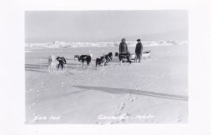 RP: CHURCHILL, Manitoba, Canada, 1930-50s; Men with Dog Pack on Sea Ice