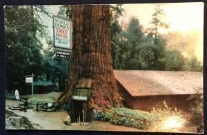 Unused Postcard Redwood Forest California LB