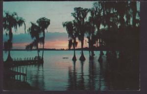 Cyprus Trees,Cyprus Gardens,FL Postcard BIN