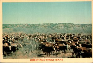 Texas Greetings White Face Cattle On A Texas Ranch