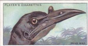 Player Cigarette Card Curious Beaks No 14 Friar Bird