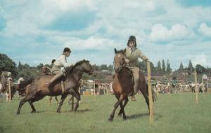 Horse ; In the Show Ring #3 , 50-60s