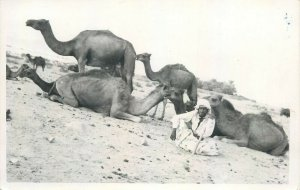 Real photo Saudi Arabia nomad life camels