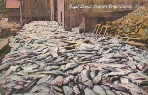 Puget Sound Salmon Catch Seattle Washington 1910