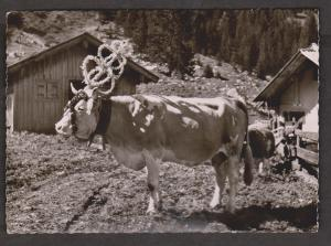 Decorated Alpine Cow, Switzerland - Real Photo - Unused