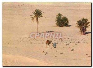Postcard Modern Southern Tunisia Towards the Sahara Camel