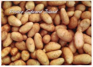 Fresh Potatoes, Prince Edward Island. 5X7in Oversize