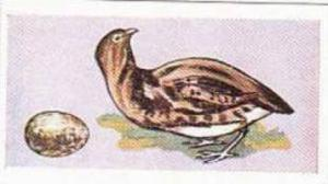 Sweetule Vintage Cigarette Card Birds & Their Eggs 1954 No 6 The Red Grouse