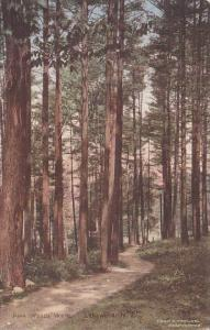 Pine Woods Walk Lakewood New Jersey Handcolored Albertype