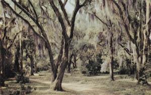Moss Draped Live Oaks Mississippi Postcard