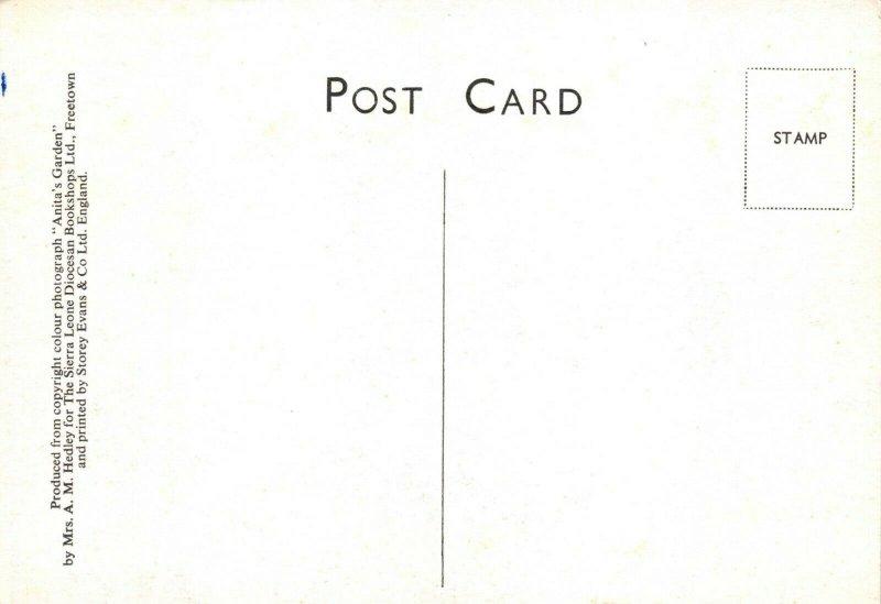 Vintage Postcard, Anita's Garden, Freetown Sierra Leone, Africa, flowers 87W