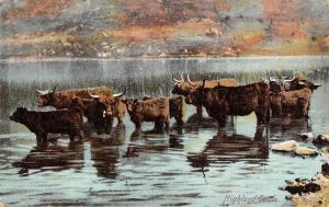 Scottish Highland Cattle, Swamp, Fauna