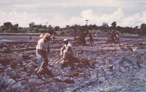 The world famous Pitch Lake, Trinidad & Tobago,B.W.I.,40-60s