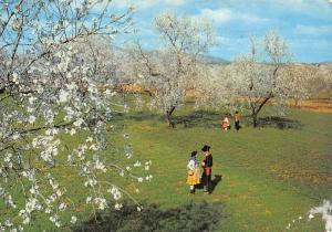 Portugal Algarve Blossomed Almond Trees Amendoeiras am flor Amandiers fleuris