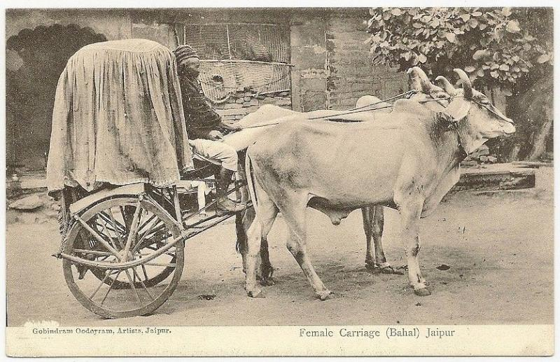 India 1910s Burkha Bullock Cart postcard Purdah transport