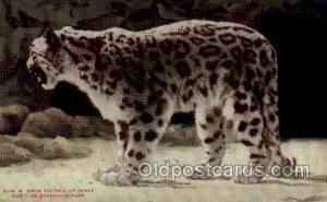 Snow Leopard, New York Zoological Park New York, USA Unused