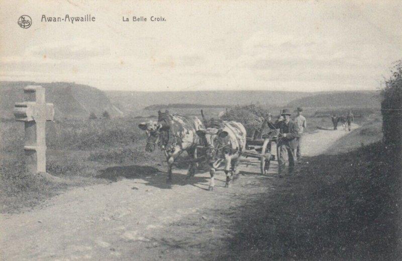 AWAN-AYWAILLE , Belgium , 1900-10s ; La Belle Croix (Ox Cart)